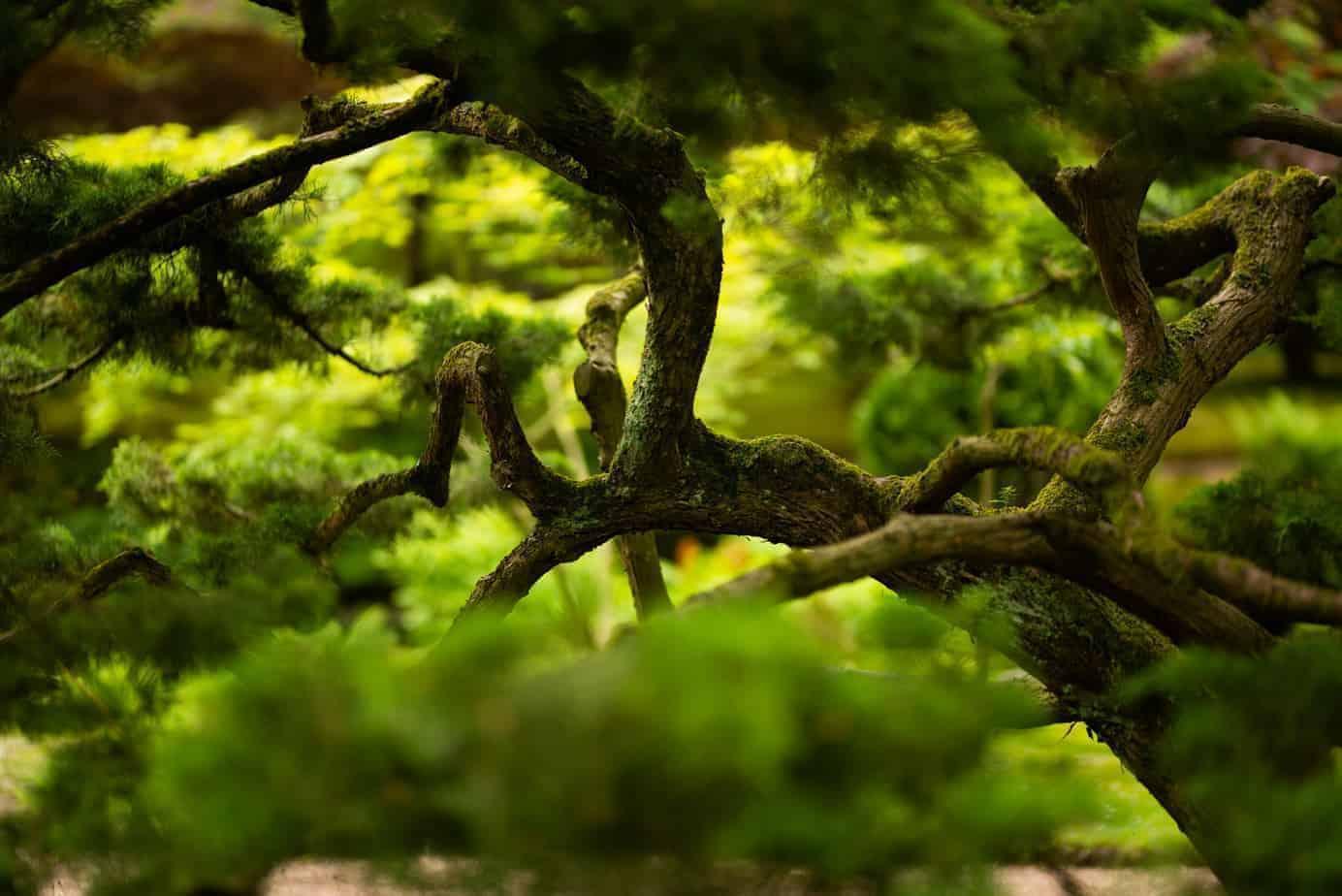 Detailfoto van een tak van een boom.