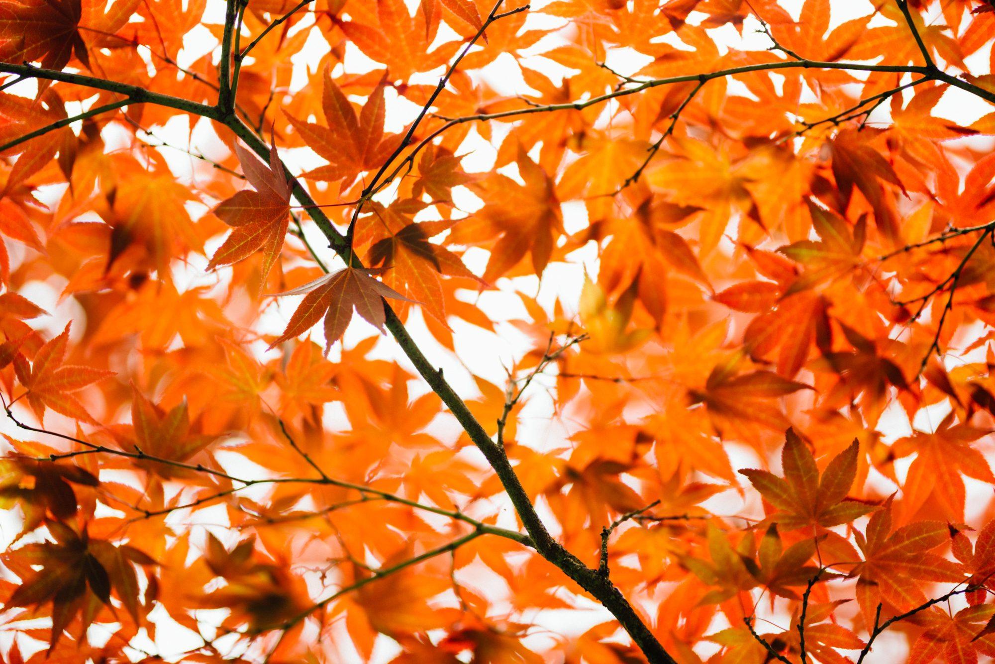 Zoals de bladeren aan deze boom, zijn we allemaal met elkaar verbonden. Nog meer verbondenheid  kun je onder andere ervaren in een compassietraining.