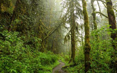 Ga op een innerlijke reis en vindt een weg uit de patronen van je brein